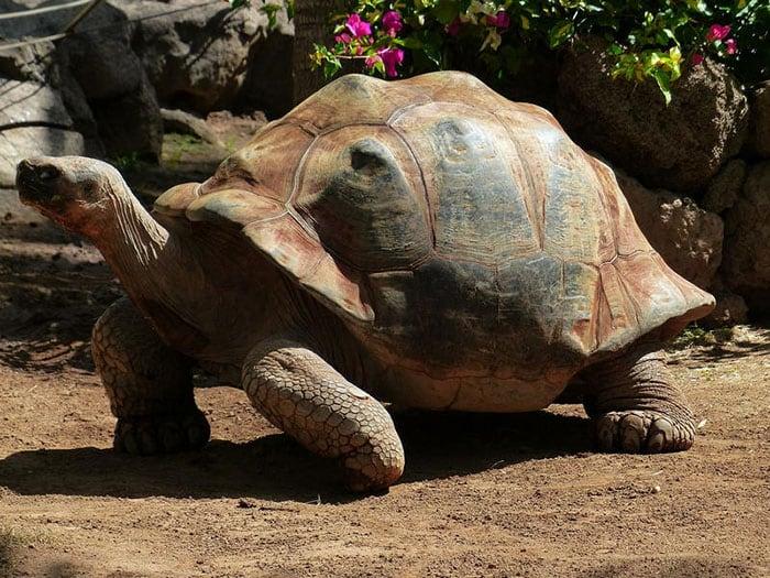 Żółw w oceanarium Afrykarium we Wrocławiu