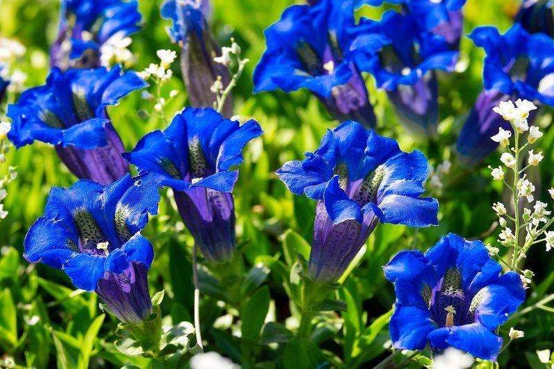 Kwiaty w Parku Botanicznym we Wrocławiu