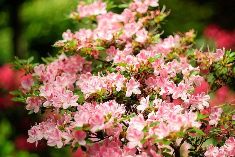 Kwiaty w Ogrodzie Japońskim